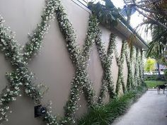 I'm on a roll here - some more ideas for making a wall look interesting. Star Jasmine diamonds.