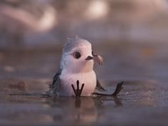 """Pixar's Latest Short, """"Piper,"""" Is Almost Painfully Adorable Funny Birds, Cute Birds, Disney And Dreamworks, Disney Pixar, Piper Pixar, Beautiful Birds, Animals Beautiful, Baby Animals, Funny Animals"""