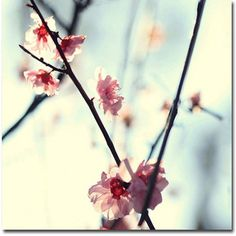 Trademark Fine Art My Spring Canvas Art by Beata Czyzowska Young, Size: 24 x 24, Pink