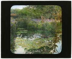 "[""Grey-Croft,"" Stephen Swete Cummins house, Huntting Lane, East Hampton, New York. Japanese iris garden] LOC"