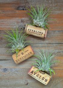 air plant wine bottle cork magnets, crafts, diy, gardening, home decor, repurposing upcycling