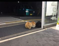 Cats sitting politely outside Japanese convenience stores restore our faith infelines