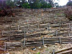 erosion control, soil bio-engineering
