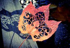 My curved leaf with shadow #ElementEdenArtSearch  #leaf #fall #autumn