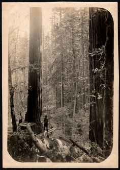 Loggers…...but I also think of Gene Stratton Porter and her books Girl of the Limberlost, and Freckles
