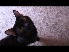 "Copy of My Youtube video ""Another Black Beauty the cat movie"" with great eligible to monetize a video music!"