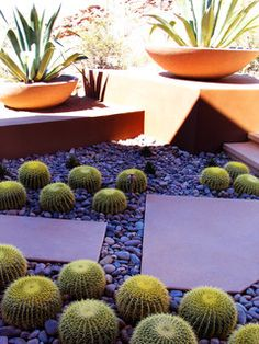 Rancho Nuevo - contemporary - landscape - other metro - by Bianchi Design - cacti and agave