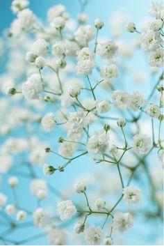 Beautiful Flowers from $41.99 | www.wallartprints.com.au #FlowerPictures #NaturePhotography