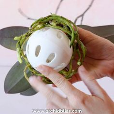 Unique Kokedama Ball Ideas for Hanging Garden Plants selber machen ball Orchid Planters, Orchid Pot, Orchids Garden, Garden Plants, House Plants, Orchid Terrarium, Garden Pods, Garden Fun, Urban Gardening