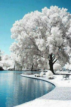 Blue and white winter