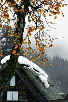 里山 Satoyama scenery - Weeping persimmon tree in Shirakawa village, Japan Beautiful World, Beautiful Places, Beautiful Pictures, Japanese Culture, Japanese Art, Winter In Japan, Yamaguchi, Japanese Architecture, Japan Travel