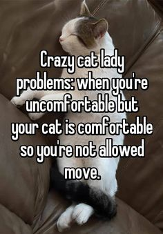Crazy cat lady problems: when you're uncomfortable but your cat is comforta - Funny Cat Quotes Funny Cat Images, Funny Cats, Funny Animals, Funny Horses, Cutest Animals, Zoo Animals, Funny Pictures, Crazy Cat Lady, Crazy Cats