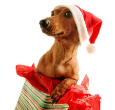 Twelve Tips of Christmas- Holiday Pet Care Safety Tips : 101 Dog Care Tips- Tip 142
