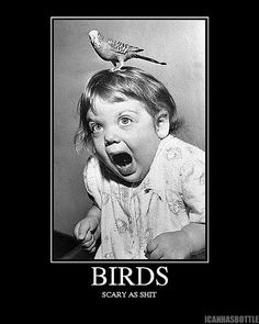 HAHA this little girls expression is hilarious!!! I probably would have the same look if a bird were on my head