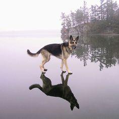 "lolipidgey: "" sourisms: "" dog spelled backwards is god "" The lord is my shepherd """