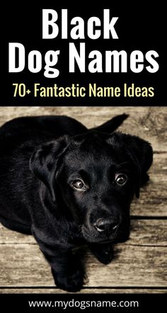 Old fashioned dog names 25