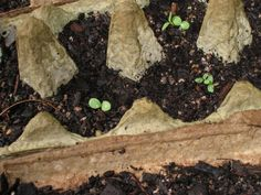 Those are my peas, they are growing good. The lettuces have started to sprout too. We got the bricks for edging the garden. The Fresh, Lettuce, Sprouts, Succulents, Garden, Kitchen, Plants, Baby, Garten