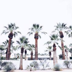 Desert botanics // via @masonrosephoto