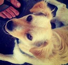 But no one really cares about that: it's the dog we're interested in. | The First Instagram Picture Ever Uploaded Is Now Four Years Old