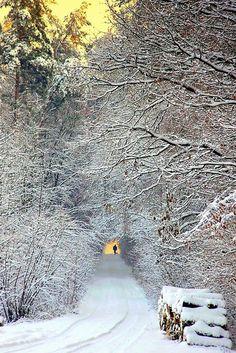 Snowy Day # Winter Poland photo via susan I Love Snow, I Love Winter, Winter Is Coming, Winter Walk, Winter Snow, Winter White, Winter Light, Winter Magic, Winter Scenery