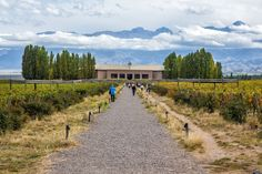 How to plan a visit to the Mendoza wine regions. Best wineries to visit in Maipu Valley, Lujan de Cuyo, and Uco Valley. Andes Mountains, Conquistador, Mendoza, Las Vegas, Places To Visit, Hiking, Tours, How To Plan, Wineries