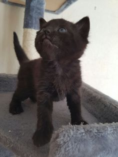 I am the mighty kitty!   cats funny pictures