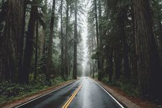 An open road in the woods [16001066]