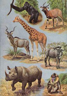 Wild Animals Pictures, Animal Pictures, Wildlife Paintings, Animal Paintings, Creature Drawings, Animal Drawings, Tropical Animals, Animals Of The World, Animals Planet