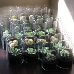 Cactus and Echeveria centerpieces, with black sand, in glass cylinder vases by guadalupe
