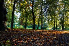 Tapis de feuilles by Jean-marc Payet - parc Montreau, Montreuil, France, octobre 2012 Click on the image to enlarge.