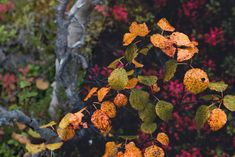 Use these five presets to give your autumn landscapes an atmospheric and warm look and really make the beautiful leaves stand out. Lightroom Gratis, Lightroom Presets, Forest Landscape, Abstract Landscape, Landscape Photography, Nature Photography, Autumn Forest, Sky Aesthetic, Beautiful Landscapes