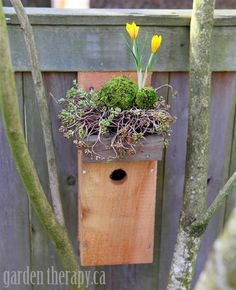 Make a bird house with a garden. Green Roof Birdhouse DIY with crocus, moss and sedum (Medium)