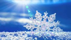 Horké a studené proudy životní síly