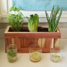 How To Turn Your Vegetable Scraps Into Vegetables Again - Windowsill Plants From Kitchen Scraps,Growing Carrots From Scraps,Regrow Vegetables From Stump,Regrow Vegetables From Kitchen Scraps Home Vegetable Garden, Fruit Garden, Edible Garden, Veggie Gardens, Vegetable Bed, Vegetable Storage, Garden Plants, Apartment Vegetable Garden, Garden Fun