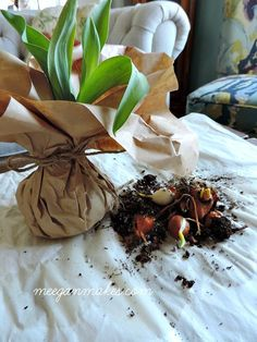 Potted plant gift inspiration click to see more ideas keywords how to make a spring hostess gift with spring bulbs negle Images