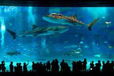 Aquarium Churaumi - Okinawa, Japan.  I have been to this and I can't wait to take LL.  This aquarium is amazing!!!