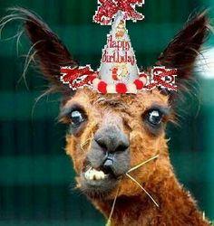 Happy Birthday Birthday Messages, Birthday Cards, Happy Birthday, Birthday Gifts, Christmas Ornaments, Holiday Decor, Quotes, Ideas, Home Decor