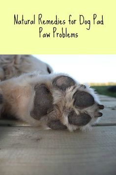 How to keep your dog's paw pads in good shape. Dog Paw Pads, Dog Paws, Happy Animals, Animals And Pets, Itchy Dog, Guide Dog, Dog Items, R Dogs, Dogs Of The World