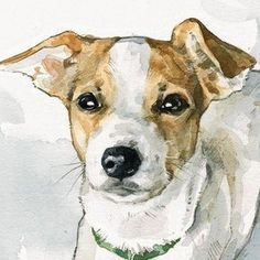 Custom Dog Portrait - 5x7 - Plain Background by david scheirer