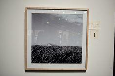 'Cornfield, Waikato, photograph by Harry Culy Polaroid Film, Photograph, Photography, Fotografie, Fotografia