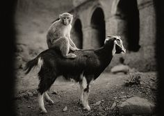 Having born from Helsinki, Finland in Pentti Sammallahti started taking pictures right from his age of 11 and already by the end of 1971 his Insect Photography, Animal Photography, Street Photography, Black White Photos, Black And White Photography, Helsinki, Artist Grants, Willy Ronis, Unlikely Friends