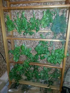 Cannabis Drying Rack Gorgeous Herb Drying Rack With A Tomato Cage  A Place To Prepare  Pinterest 2018