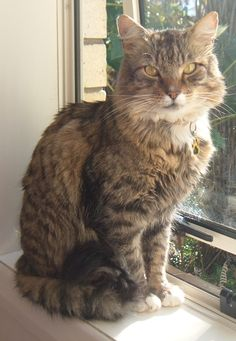 Prince Cat | Pawshake