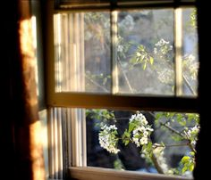 The morning light moves up so slowly and peeks in my bedroom windows.The sunrise is so naughty! Window View, Open Window, Through The Window, Green Gables, Morning Light, Morning View, Early Morning, Light And Shadow, Windows And Doors