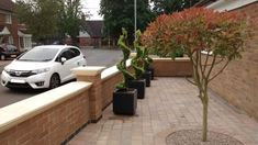Italian Ligustrum spirals planted into fibre glass cube planters.. fun-formal with a twist!