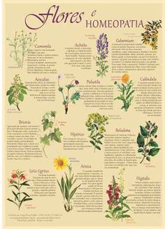 Florais De Bach Lindo Cartaz Sobre As Flores Na Homeopatia - R$ 36,00                                                                                                                                                                                 Mais