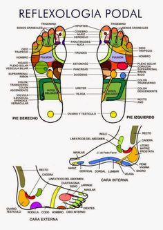 La reflexología , reflexoterapia o terapia zonal es la práctica de estimular puntos sobre los pies, manos, nariz u orejas (llamados «z...