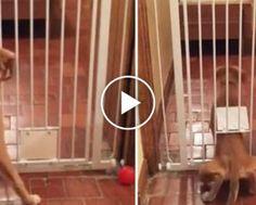 Gato Selvagem Apaixona-se Por Cabelo De Operador De Câmara Durante Filmagens