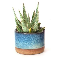 Sister Golden | Ceramic Planter (Multiple Colors) - the perfect little pot for succulents or cacti!
