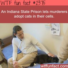 Indian state prison let prisoners adopt a cat - WTF fun facts